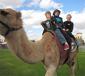 camel ride in cheap price in india