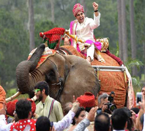 wedding party for elephant