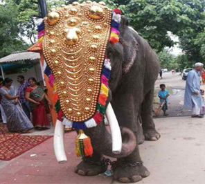 wedding for elephant