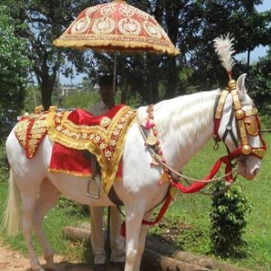 beautiful horse ride for rent in delhi