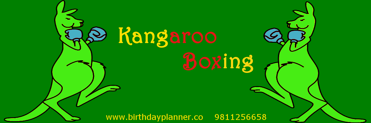 kangaroo boxing on rent