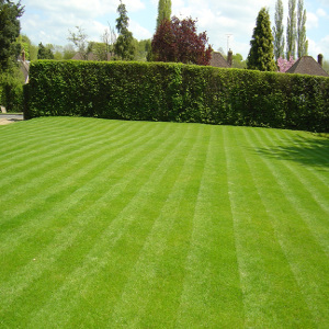 lawn for wedding party