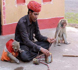 monkey play on rent in delhi